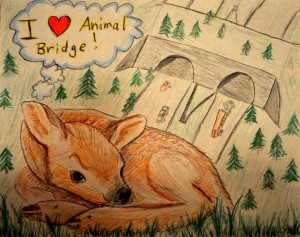 Winning artwork in our 2015 Bridging Futures contest for best mammal or bird category by Jeffrey Henion of Tolt Middle School.
